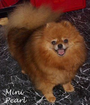 Minnie Pearl Of Lenette