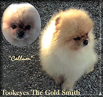 Tookeyes The Gold Smith