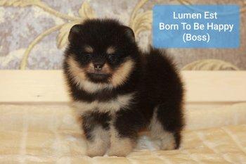 Lumen Est Born To Be Happy