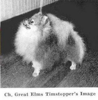 Great Elms Timstopper's Image
